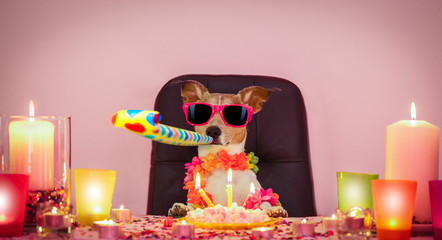 Foto auf AluDibond Crazy dog happy birthday dog