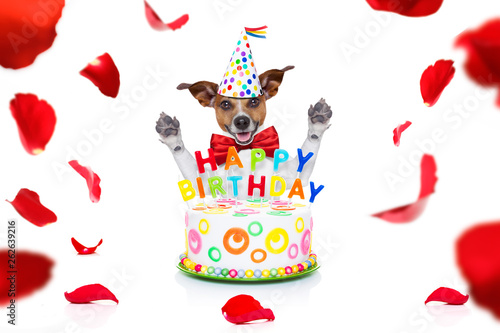 Happy Birthday Dog Stock Photo And Royalty Free Images On Fotolia