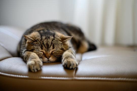 cat Cute little red kitten sleeps sleeping cat