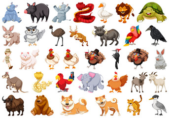 Set of wild animal