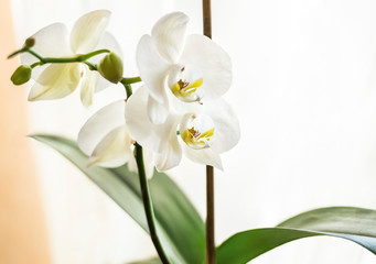 A beautiful white orchid on the windowsill decorates the room.