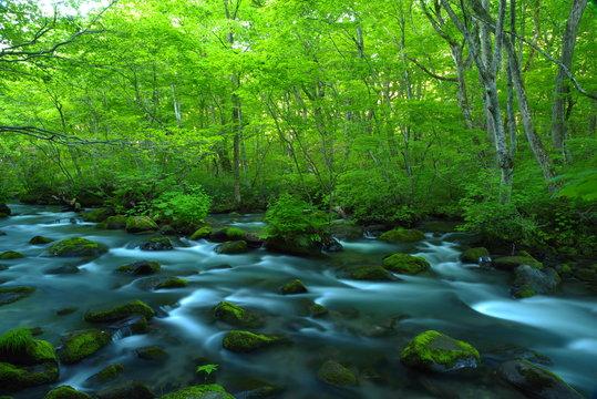 青森、奥入瀬渓流の新緑