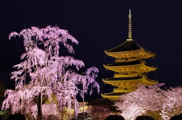 京都、東寺の桜