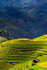 Garden Poster Rice fields Rice fields on terrace in rainy season at Mu Cang Chai, Yen Bai,