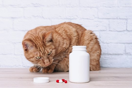Red cat looking curious to medicine capsules beside  a open pill bottle.