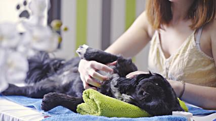 Professional caressing at dog salon