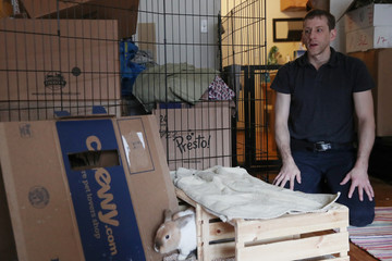 Jacob Levitt looks on while one of his eight adopted bunnies goes through a box, at his apartment in New York