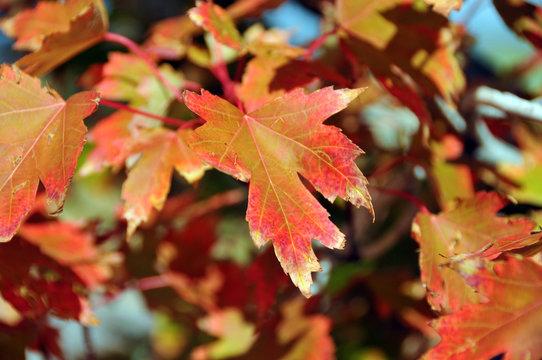 Autumn Pattern Leafs