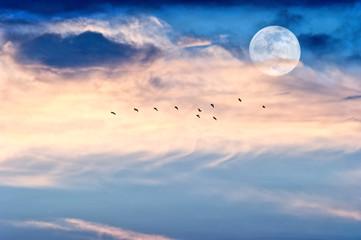 Wall Mural - Moon Clouds Birds