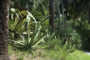 Mediterranean garden mit agave plants and lush vegetation