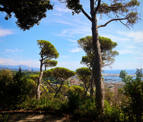 Mediterranean garden with beautiful landscape of the coast and the Ligurian sea framed by high Italian stone pines