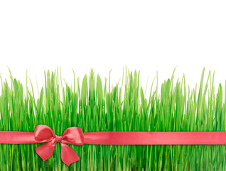 Green grass red silk ribbon