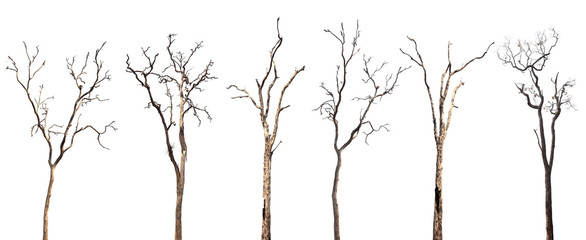 Collection of dead trees silhouettes isolated on white background