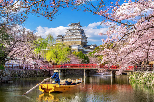 Himeji castle and cherry blossoms in spring, Japan.