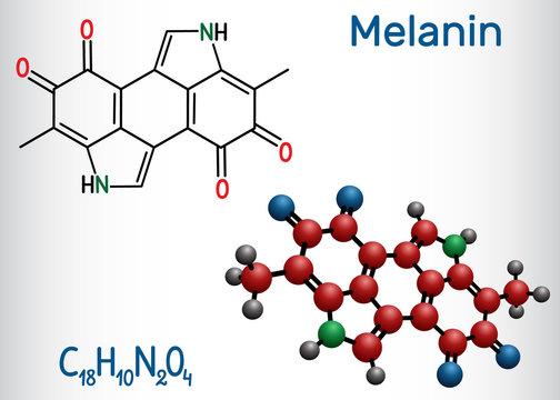 Melanin  molecule. Structural chemical formula and molecule model