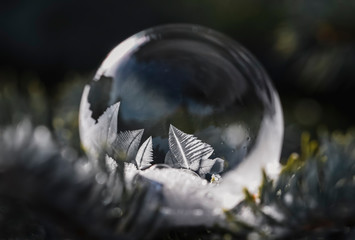Close up of soap bubble freezing on an everygreen branch outside.