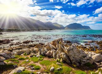 The algae among coastal stones