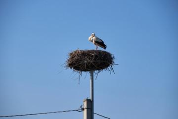 Stork in Stork's Nest.