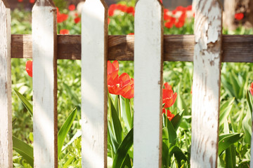 View of beautiful spring flowers in garden through fence on sunny day