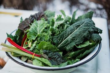 fresh chard leaves prepared for salad, Mangold