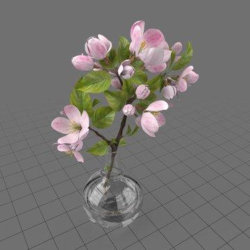 Apple flowers in glass vase