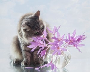 Still life with bouquet of flowers and adorable gray kitty