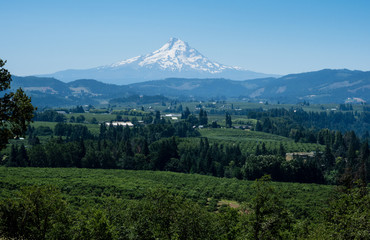 View of the farmlands in Columbia River Valley with Mount Hood at the background from Panorama Point - Hood River, Oregon state, USA