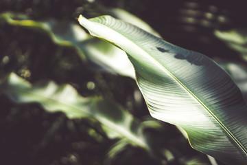 Beautiful tropical plants