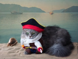 Portrait pretty kitty on the sea background in pirate costume