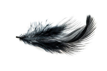 Close-up of Black feather isolated on white