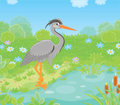 Grey heron by a small lake among green grass and flowers of a meadow on a summer day, vector illustration in a cartoon style