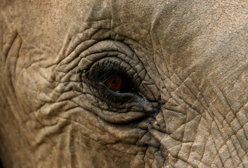 An elephant is pictured at a game reserve adjacent to the world-renowned Kruger National Park in Mpumalanga province