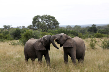 Elephants are seen at a game reserve adjacent to the world-renowned Kruger National Park in Mpumalanga province