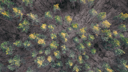 aerial veiw of forest. drone shot . toned picture