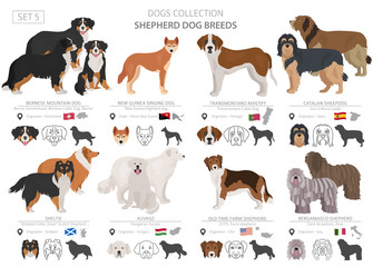 Shepherd and herding dogs collection isolated on white. Flat style. Different color and country of origin