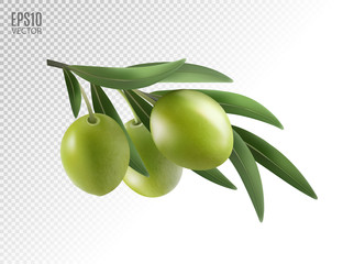 Green olive branch isolated on transparent background as package design composition. Photo-realistic vector, 3d