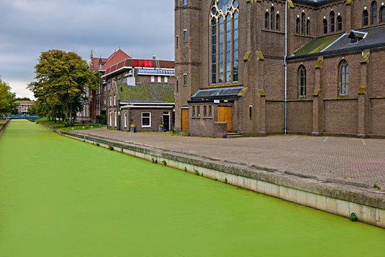 spirogyra green algae covered canal