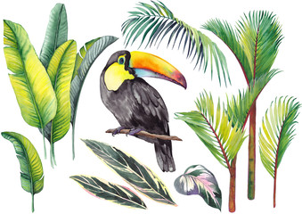 Tropical set with a toucan, banana leaves, palm and calathea leaves. Watercolor on white background. Isolated elements for design.
