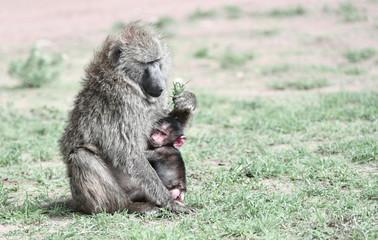 Paviane mit Baby