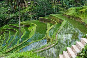 Reisterrassen Bali, Indonesia