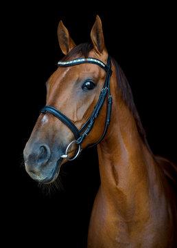 red budyonny horse on black background
