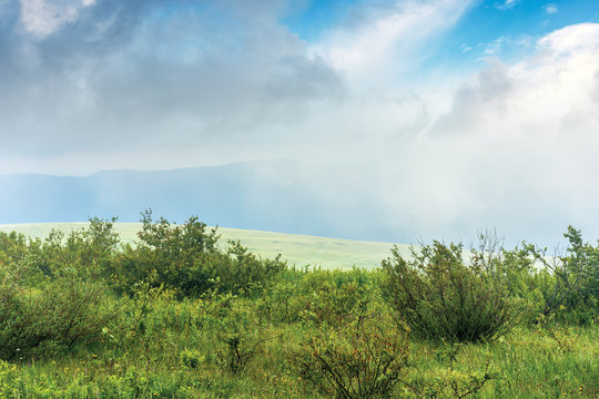 shrubs on a meadow in fog. stormy weather in summer. mountain visible in the distance. overcast sky