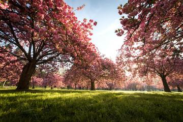 Spring trees in paris