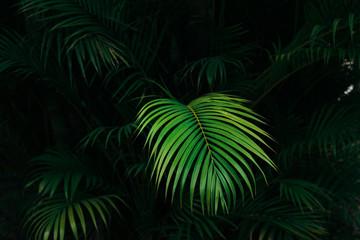 Bight palm leaf with dark palm forest background