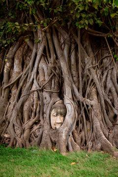 Buddha head In tree roots at Wat Phra Mahathat. Ayutthaya,