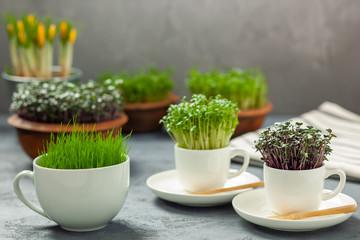 Rośliny w filiżankach - uprawa rzeżuchy, czerwonej kapusty i trawy