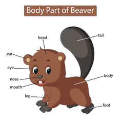 Diagram showing body part of beaver