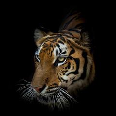 Fotobehang Tijger Portrait of tiger.