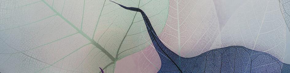 Keuken foto achterwand Texturen transparent skeleton of colorful colored leaves