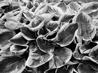 Poster Coral reefs close view of plant leaves in black and white